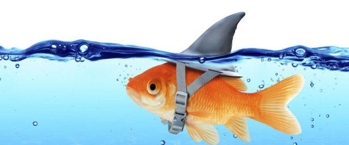 Qu'est ce qu'un «poisson» au cartes ?